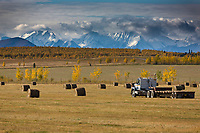 Large round bales of straw in an agriculture field, Alaska range mountains in the distance, Delta Junction, Alaska.