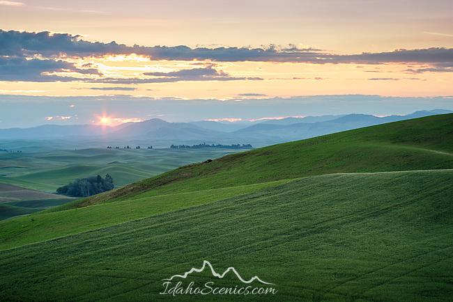 Washington, Eastern, Palouse, Spring sunrise over the rolling hills of the Palouse.