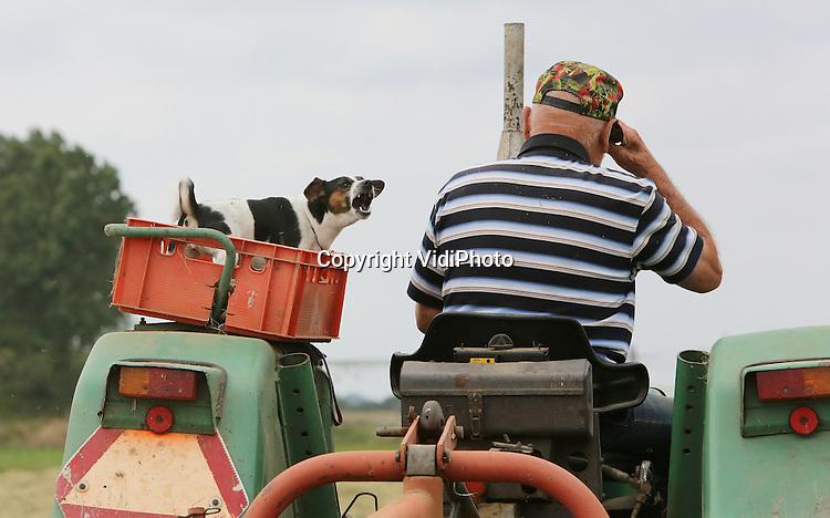 Foto: VidiPhoto<br /> <br /> DODEWAARD - Keffend van plezier neemt de tweejarige jack russel Pukkie 2 dinsdag plaats in de kist op de tractor van zijn baas, Hein van Kleef uit Dodewaard. Samen hooi schudden voor de 120 vleeskoeien van de Betuwse veehouder. Zoals dat achttien jaar lang ook gebeurde met Pukkie 1. De kleinste van het onafscheidelijke duo overleed vorig jaar op achttienjarige leeftijd. Pukkie 2 neemt nu die taak over. Alsof er niets veranderd is. Tot in de verre omtrek kent iedereen het duo Hein en Pukkie. Samen reizen ze met de tractor overal naar toe.
