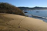 Ano Nuevo State Park.  Tracks in sand dune.