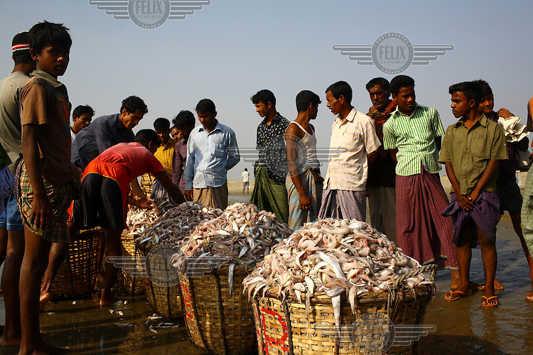 Selling fresh fish on Sonadia island....