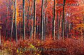 Marek, LANDSCAPES, LANDSCHAFTEN, PAISAJES, photos+++++,PLMP01241J,#L#, EVERYDAY