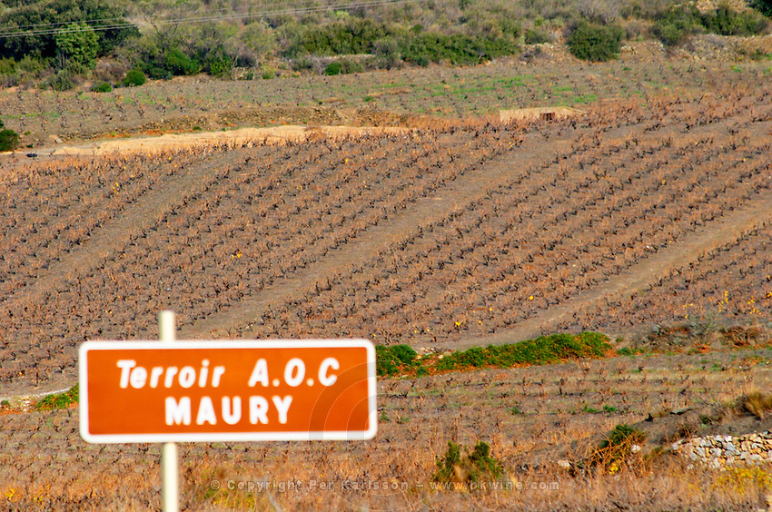 Terroir AOC Maury. Vineyard in focus and sign out of focus. Maury. Roussillon. France. Europe.