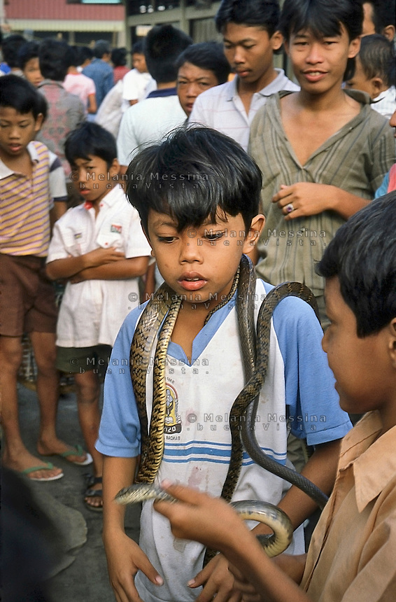 Indonesia, Java island: kids playing with the snakes of the healer Pak Iwo.<br />