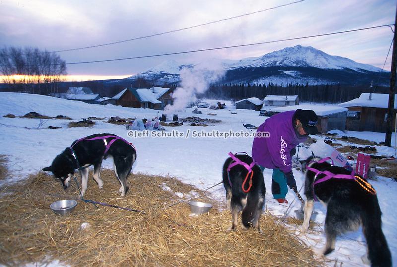 D.Jonrowe Feeds Dogs in AM Takotna Chkpt 97 Iditarod.24 Hour Layover Sunrise