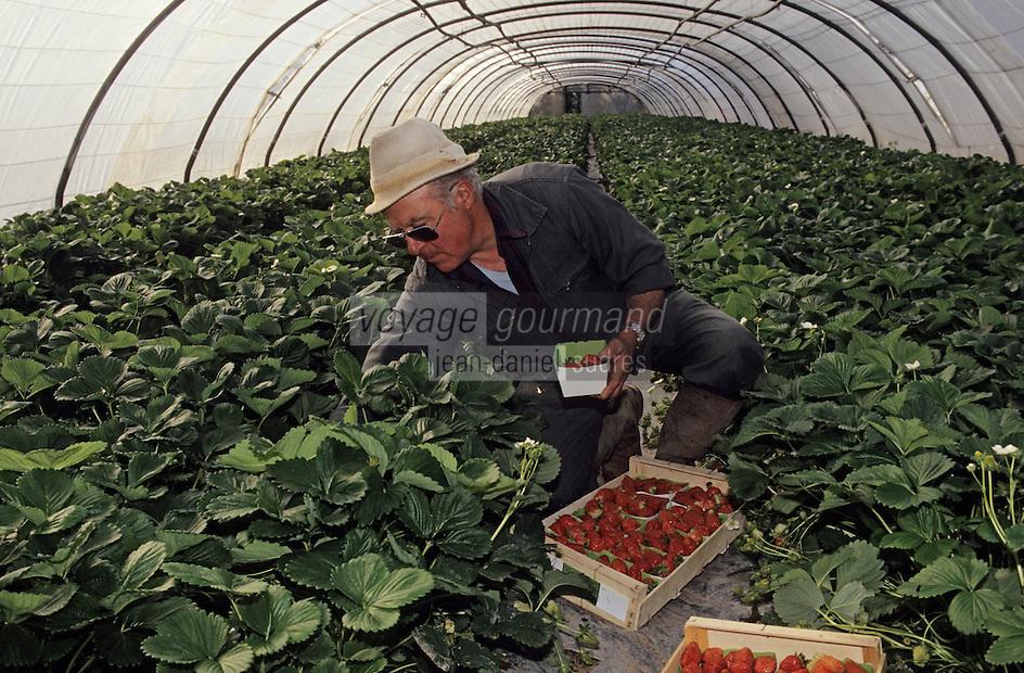 Europe/France/Pays de la Loire/49/Maine-et-Loire/Longue-Jumelles: Récolte des fraises du Val de Loire<br /> PHOTO D'ARCHIVES // ARCHIVAL IMAGES<br /> FRANCE 1990