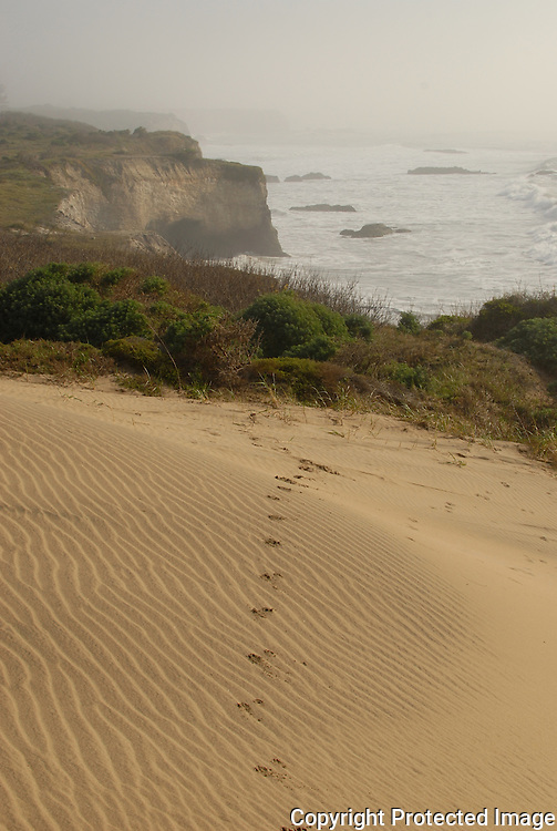 Ano Nuevo State Park. Tracks in sand.