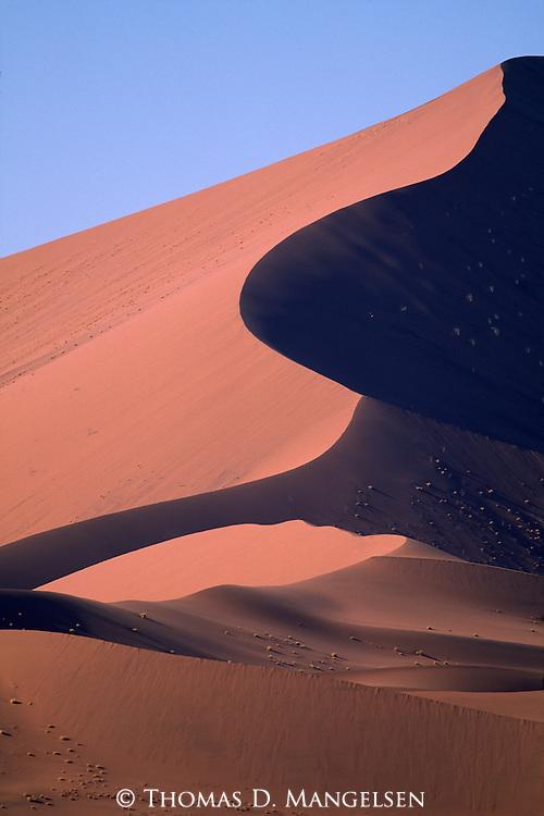 High sand dune in the Little Kulala region of Sossusvlei, Namibia.