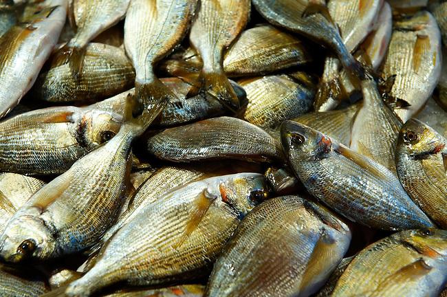 Fresh oratine Venice Rialto Fish Market