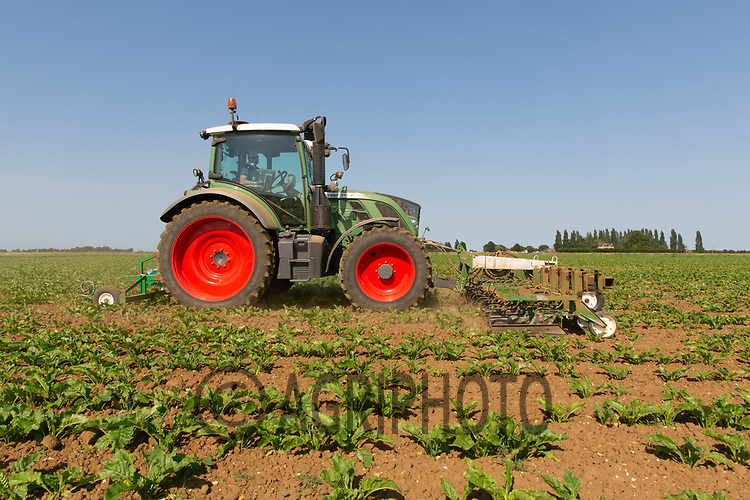 23.6.2020 Mechanically hoeing sugar beet in the Lincolnshire Fens <br /> ©Tim Scrivener Photographer 07850 303986<br />      ....Covering Agriculture In The UK.