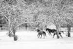 Images: Horses in Snow, Norris, TN 2011