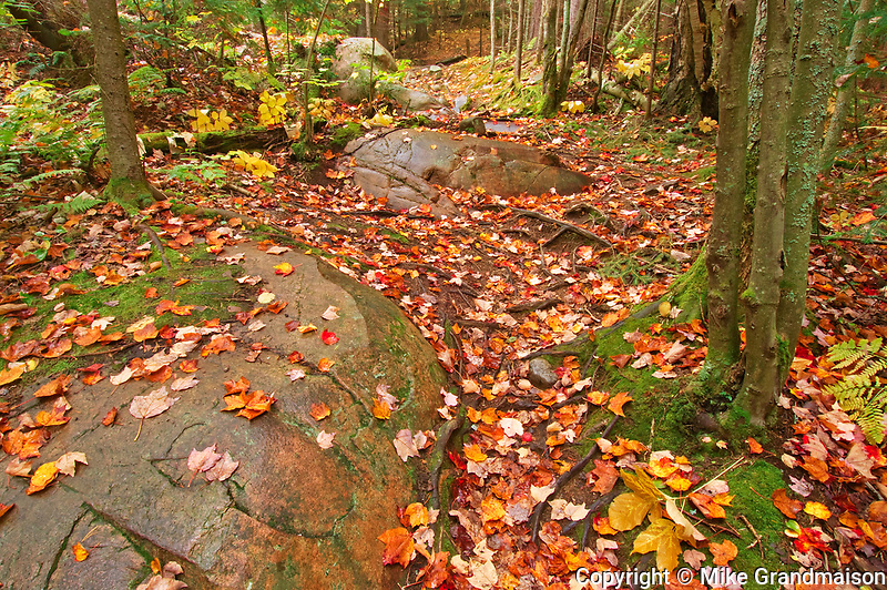 Autumn colors along the Granite Ridge Trail<br />Killarney Provincial Park<br />Ontario<br />Canada