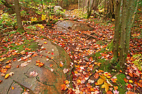 Autumn colors along the Granite Ridge Trail<br />