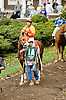 Richie Rich before The Delaware Park Arabian Juvenile Championship at Delaware Park on 10/27/12...
