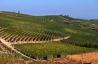 Italien, Piemont, Weinberge bei Monferrato, UNESCO-Weltkulturerbe