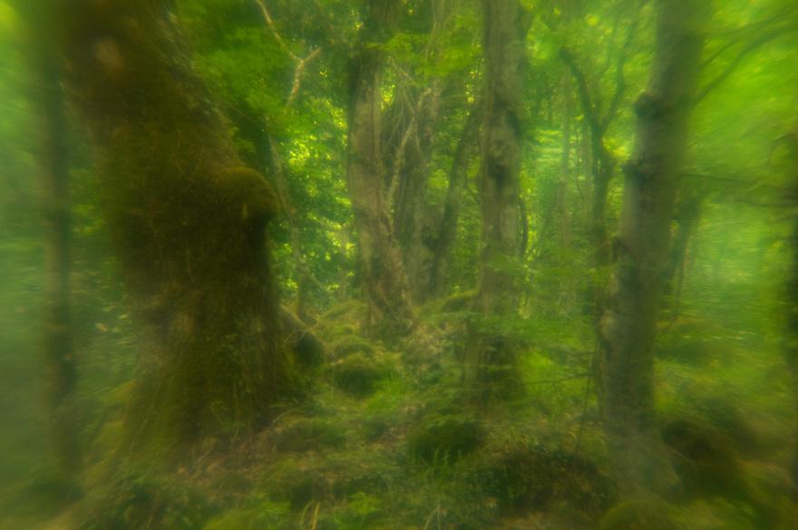 Apulia; Foresta Umbra; Gargano National Park; Gargano Peninsula; Italy
