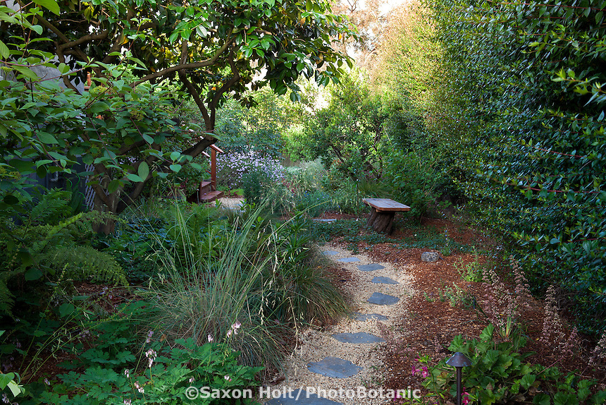 Permeable path with stepping stones on gravel through side yard privacy hedge; with California native plants, Heath-Delaney garden