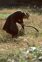 Europe/France/Auvergne/15/Cantal/Le Rouget : Agricultrice lors d'une fenaison à la faucille [Non destiné à un usage publicitaire - Not intended for an advertising use] [<br /> PHOTO D'ARCHIVES // ARCHIVAL IMAGES<br /> FRANCE 1980