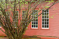 A spring shrub contrasts against the red clapboard side of a small building in Billie Creek Village, Rockville, Indiana