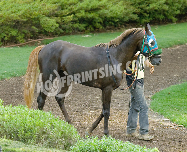 Secret Treasour before The Alec Courtelis Juvenile Arabian Stakes at Delaware Park on 7/9/12