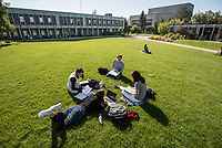 Engineering students Mason Smales, Megan Wagner, Kaily Stanton, and Monique Mojica study on UAA's Cuddy Quad.
