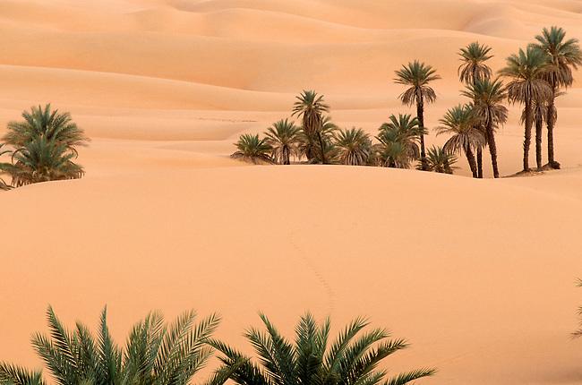 Le Sahara libyen, pays Daouda, vegetation pres du lac Mandara *** Daouda country, palm trees near lake Mandara. The Libyan Sahara