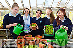"The 5th year students from Presentation Castleisland  who are through to the national final of ""the one good idea project"" in Dublin with their project ""greener footprints"" . Pictured L-r Ciara murphy,Miss Niamh Kelly,Jackie Bonilla,Christina O'Connor and Ayano Ikai"