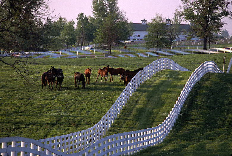 White fences and thoroughbred horses at famed Calumet farm.