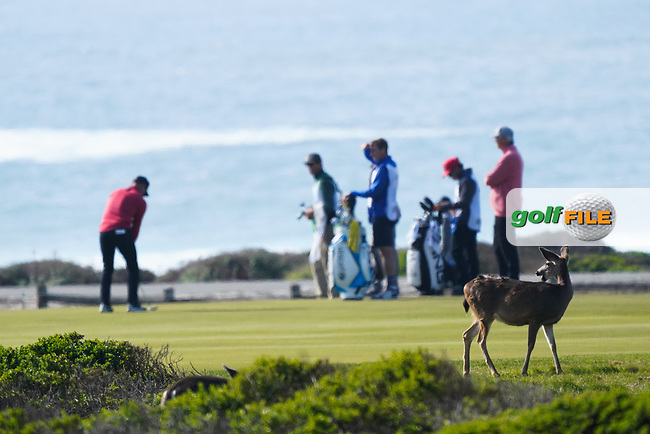 Paul Casey (ENG) in action at Monterey Peninsula during the second round of the AT&T Pro-Am, Pebble Beach, Monterey, California, USA. 06/02/2020<br /> Picture: Golffile   Phil Inglis<br /> <br /> <br /> All photo usage must carry mandatory copyright credit (© Golffile   Phil Inglis)