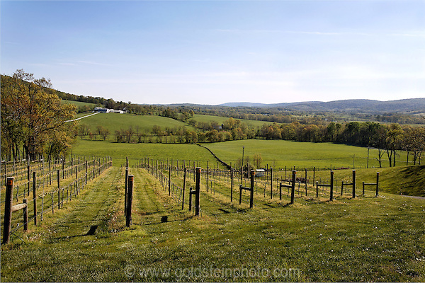 View from Hillsborough Winery in Loudoun County Virginia.
