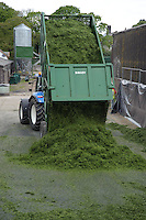 Tipping grass into aa silage clamp, Scotland.
