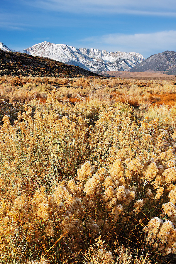 Mount Wood and Parker Peak dusted with a November snowfall rising above desert sage brush, eastern Sierras, Mono Basin National Forest Scenic Area, near Lee Vining, California, USA