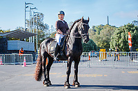 Good Morning Equitana - this fabulous sight greeted us as we arrived at the main gates: Jody Hartstone and the stunning dressage stallion: Crystal Mount Xodo, with One Tree Hill in the background. 2019 Equitana Auckland. ASB Showgrounds. Auckland. New Zealand. Friday 22 November. Copyright Photo: Libby Law Photography