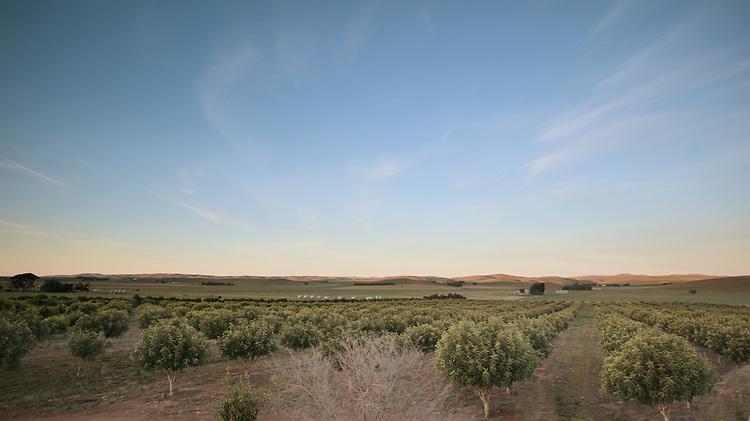 Australian Carob Company, Michael Jolly. Near  Burra South Australia.