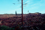 Logging, Washington State, clear-cut hill, forest buffer, .Wahkiakum County, Washington State, Pacific Northwest, USA,.