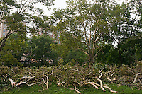 New York, NY -  19 August 2009 - Tree limbs, damaged during a severe storm, waiting to be turned into mulch by park workers. On the might of August 18 a severe storm passed through Riverside Park, Central Park, and Randalls Island, with winds up to 70 mph. Over 100 trees in the north end of Central Park, near the Great Hill and the North Woods were felled and 500 seriously damaged by the storm.