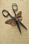 Butterfly over an old pair of scissors