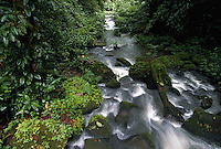 Stream flowing through rain forest, La Selva Biological Research Station, Costa Rica