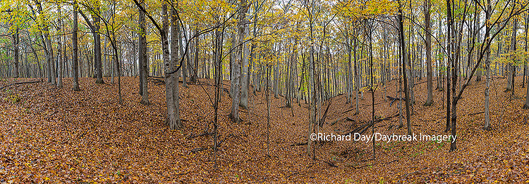 63895-14309 Trees in fall at Stephen A. Forbes State Park, Marion Co., IL