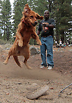 Dog trainier Willie Stevens takes Casey through snake-avoidance training at Davis Creek Park in Washoe Valley, Nev., on Saturday Aug. 18, 2012..Photo by Cathleen Allison