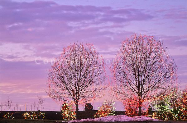 Christmas lights on deciduous trees, West Des Moines, Iowa, AGPix_0347.
