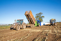 Ensiling forage maize into AgBags for use in Anaerobic Digestion - Lincolnshire, October