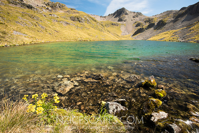 Crystal clear Hinapouri Tarns, Nelson Lake National Park, South Island, New Zealand, NZ