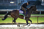 November 1, 2018: Divisidero, trained by Kelly Rubley, exercises in preparation for the Breeders' Cup Mile at Churchill Downs on November 1, 2018 in Louisville, Kentucky. Alex Evers/Eclipse Sportswire/CSM