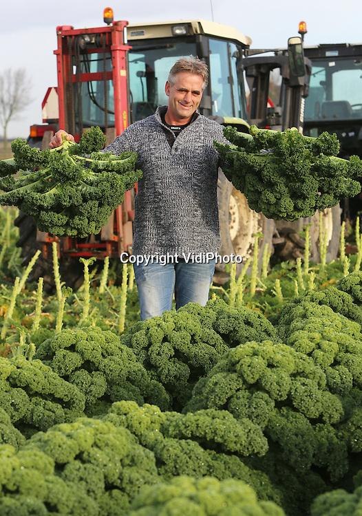 Foto: VidiPhoto<br /> <br /> NIEUWE NIEDORP - Boerenkoolteler Ard Ruiter uit het Noord-Hollandse Nieuwe Niedorp.