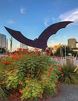 "As crowds gather nightly to watch 1.5 million Mexican free-tailed bats shoot out from under the Congress Avenue Bridge. Across Congress Street from the Statesman stands a sculpture, ""Nightwing,"" that celebrates Austin's iconic bats."