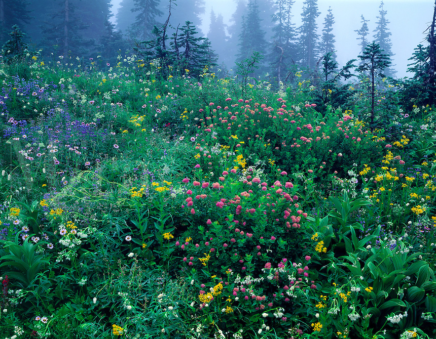 Wildflowers in an ethereal and misty forest paradise. Mt. Ranier National Park, Washington.