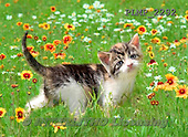 Marek, ANIMALS, REALISTISCHE TIERE, ANIMALES REALISTICOS, cats, photos+++++,PLMP2292,#a#
