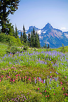 Wildflower meadow in Mt. Rainier National Park, Washington
