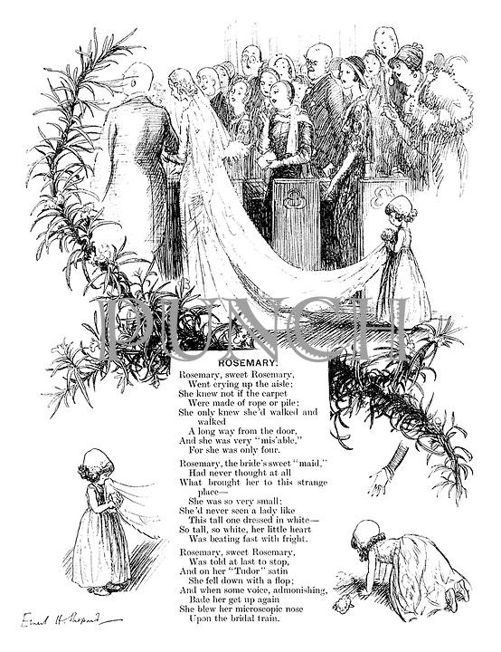 Rosemary (illustrated poem).